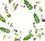 Cadre rond lumineux coloré des feuilles, des baies et des fleurs Configuration plate, vue supérieure Image libre de droits