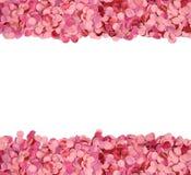 Cadre rose de confettis image stock