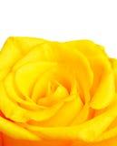 Cadre rose de jaune Photographie stock