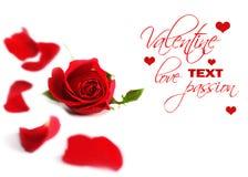 Cadre rose de rouge Photographie stock libre de droits