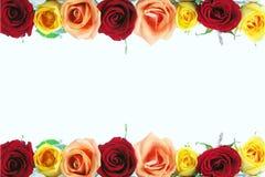 Cadre rose floral Photographie stock libre de droits