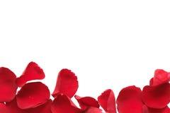 Cadre rouge de pétale de Rose Image stock