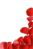 Cadre rouge de pétale de Rose Images stock