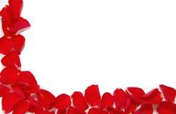 Cadre rouge de pétale rose Photo libre de droits
