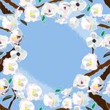 Cadre sans couture de cerisier Photographie stock libre de droits