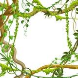 Cadre sauvage tordu de branches de lianes illustration libre de droits