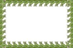 Cadre simple des feuilles en bon état d'isolement sur le fond blanc Images stock