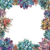 Cadre succulent Composition des fleurs Carte postale pour votre texte Vecteur illustration libre de droits