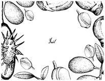 Cadre tiré par la main d'Ambarella et de fruits rouges de Mombin Photos libres de droits