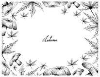 Cadre tiré par la main d'Autumn Maple Leaves et des champignons illustration libre de droits