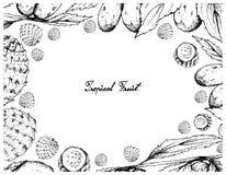Cadre tiré par la main de date et de fruits chinois de cactus de Copao illustration libre de droits