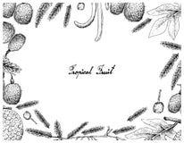 Cadre tiré par la main des fruits à pain et de la sauterelle africaine Bean Fruits Illustration Libre de Droits