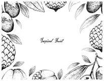 Cadre tiré par la main des fruits de jujube et de rotin illustration de vecteur