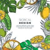 Cadre tropical avec des palmettes, citron, chaux, orange Illustration de vecteur Affiche, bannière ou calibre de carte de voeux illustration libre de droits