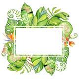 Cadre tropical de feuilles d'aquarelle Image libre de droits