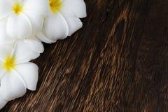 Cadre tropical de fleurs de Frangipani Photographie stock