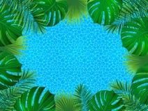 Cadre tropical de vecteur illustration exotique d'usines fond avec des usines de jungle, feuilles de paumes, texture de mer Beau illustration stock