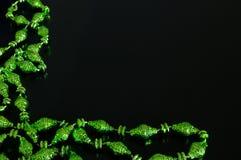 Cadre vert Photos stock