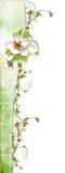 Cadre vert avec des fleurs de pommier Photos libres de droits