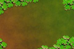 Cadre vert clair de saynt de jour de patrick de symbole de vacances de chance d'usine de trèfle d'oxalide petite oseille sur une  illustration de vecteur