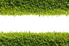 Cadre vert de buisson Photographie stock
