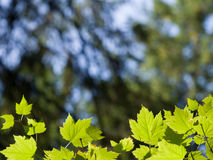 Cadre vert de lame Image stock