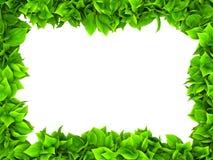 Cadre vert feuillu Photo stock