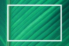 Cadres blancs sur le fond vert de congé Image libre de droits