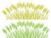 Cadres de blé Photographie stock libre de droits
