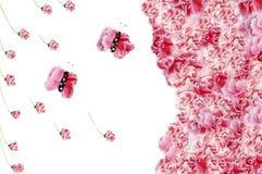 Cadres de fleur Photographie stock libre de droits