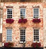 Cadres de fleur dans Windows photo stock