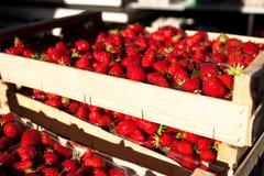 Cadres de fraises fraîches sur le marché Photographie stock libre de droits