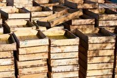 Cadres de poissons Image stock