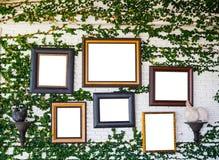 Cadres de tableau sur le mur de lierre, cadres de tableau vides avec l'espace de copie Photographie stock libre de droits