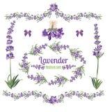 Cadres et éléments de fête réglés avec des fleurs de lavande pour la carte de voeux Illustration botanique illustration libre de droits