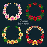 Cadres et étiquettes tropicaux de fleur illustration libre de droits