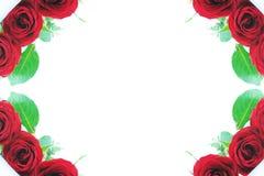 Cadres faisants le coin roses de rouge Image libre de droits