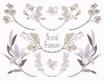 Cadres floraux colorés des textes de vecteur, branches, lauriers illustration de vecteur