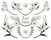 Cadres floraux noirs des textes de vecteur, branches, lauriers illustration stock