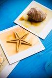 Cadres instantanés des étoiles de mer et des coquillages Photos libres de droits