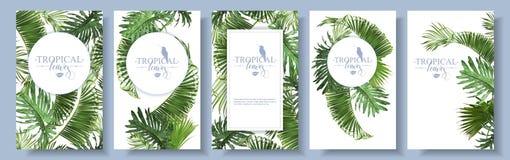 Cadres tropicaux de feuilles illustration de vecteur
