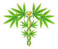 Caduceo médico de la planta de marijuana Imagen de archivo libre de regalías