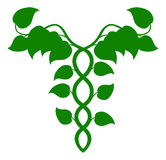 Caduceo olistico della medicina o concetto del DNA Fotografia Stock Libera da Diritti