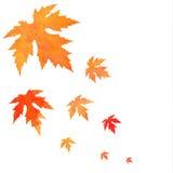 Caduta arancio delle foglie dipinta acquerello Fotografie Stock Libere da Diritti