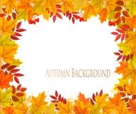 Caduta Autumn Colorful Leaves Background illustrazione vettoriale