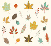 Caduta Autumn Leaves Vector Set Fotografia Stock