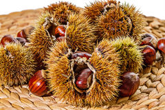 Caduta Autumn Raw Food: Castagne Fotografie Stock