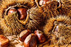 Caduta Autumn Raw Food: Castagne Fotografia Stock Libera da Diritti
