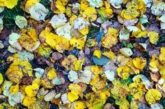 Caduta caduta 3 delle foglie Fotografia Stock