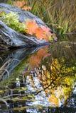 Caduta Colors Van Dusen Gardens di riflessioni dei fogli Fotografie Stock